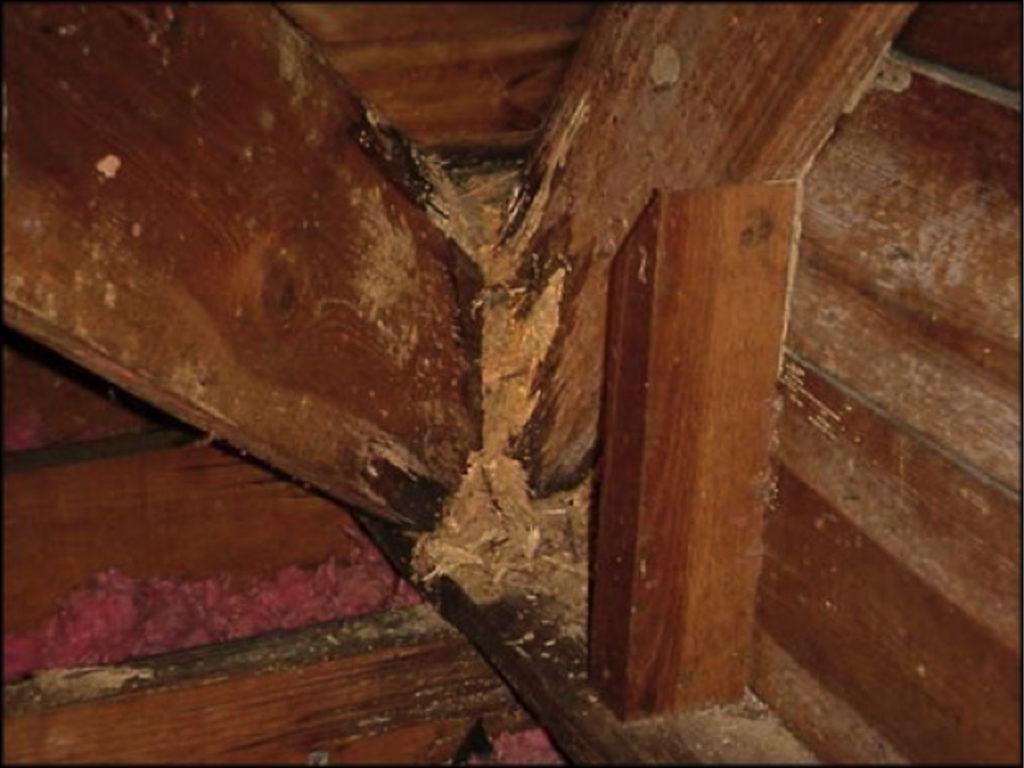 Diagnostic termite et état parasitaire